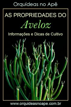 Succulent Gardening, Succulent Terrarium, Paddle Plant, Cactus Y Suculentas, Natural Remedies, Garden Design, Flora, Succulents, Home And Garden