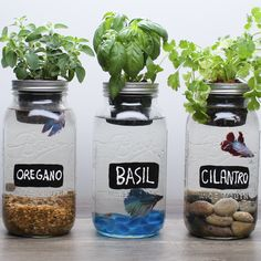 DIY Self-Fertilizing Aquarium Planters | Real Moms
