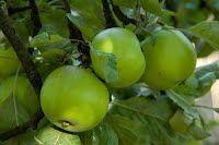 100 sfaturi naturiste - Leacuri din plante Vegetables, Plant, Vegetable Recipes, Veggies