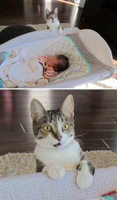 15 Pictures of Cats Discovering Things For the First Time and Their Funny Reactions. We Forgot To Tell Our Cat That We Had A Baby
