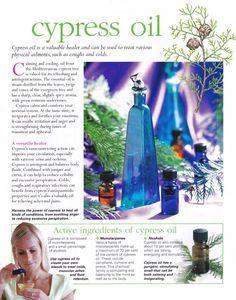 Young Living Essential Oils: Cypress.   For more information, please visit https://www.facebook.com/pages/Rog-Essential-Oils/220772314786084  or  rogessentialoils@gmail.com