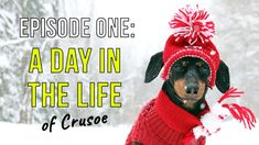 Episode One: A Day in the Life of Crusoe