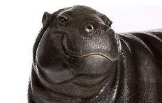 Portretten van dieren | Froot.nl