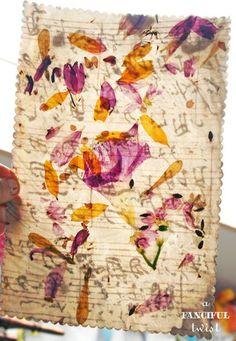 pressed wax flowers