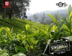 #Singbulli Tea Estate