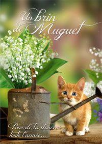 Envoyez à vos proches cette carte où un mignon petit chat offe le muguet du bonheur !