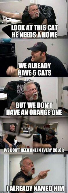 Animal Memes, Funny Animals, Animal Humor, Cat Memes, Funny Memes, Funny Shit, Hilarious, Funny Stuff, Cheer Someone Up