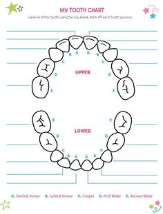 printable tooth chart - Yahoo Search Results