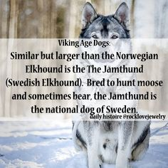 All Things Heathen,Viking and Heathen Related Clothing and accessories Norse Pagan, Old Norse, Norse Mythology, Viking Life, Viking Warrior, Viking Woman, Mini Siberian Husky, Siberian Huskies, Puppy Husky