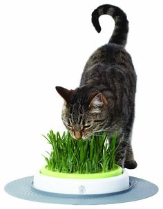 This cat grass feeder is an awesome way to treat your cat! Plus it helps reduce furballs!