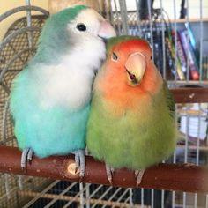 Happy birds!