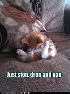 Stop, drop, and nap