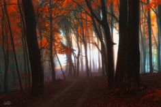 -Astral road through the wood- by Janek-Sedlar on DeviantArt