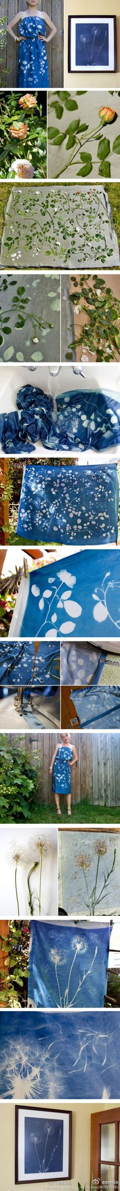 creating a botanical pattern on cyanotype fabric or paper (Sun-dyed fabric)