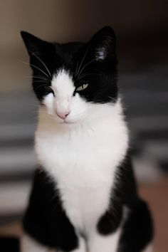 <3.... I love black and white cats. Reminds me a little of my kitty Everest--who waits for me, I hope, at the rainbow bridge.