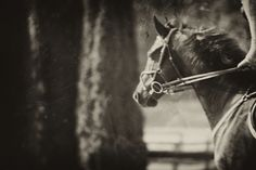 Equus Collection by Arden Ward Upton. www.ardenwardupton.com 205-427-1144 for more info.  #ardenwardupton #ardenphotography #equuscollection