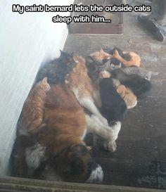 Jake used to do this with the outdoor kitties on the farm!