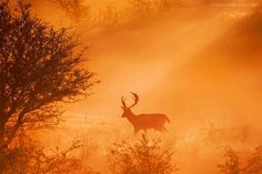 Stag on Stage by Roeselien Raimond Sounds Of Birds, World On Fire, Weekend Fun, Deer, Cool Photos, Elephant, In This Moment, Nature, Stage