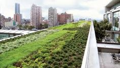 Image result for benefits of extensive green roof