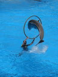 dolfijnentrainer - Google zoeken