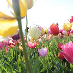 Erinnerungen an den Frühling… farbenfroh und beglückend