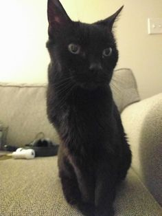 Jasmine will be 19 this year! We've grown up together. - credit to: swipurr.com