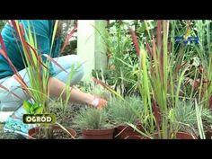 Ogród bez Tajemnic odc. 4, sezon 2 - YouTube Plants, Youtube, Planters, Plant, Planting