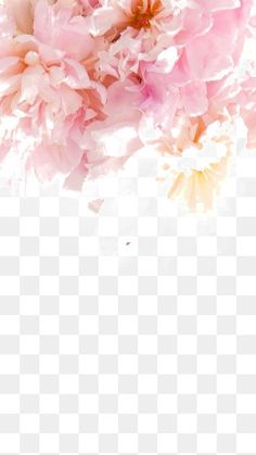 Iphone 6 plus iphone flower wallpaper - pink peony Vintage Flowers Wallpaper, Flower Wallpaper, Large Flowers, Pink Flowers, Watercolor Illustration, Watercolor Paintings, Transparent Wallpaper, Pink Phone Cases, Video Pink
