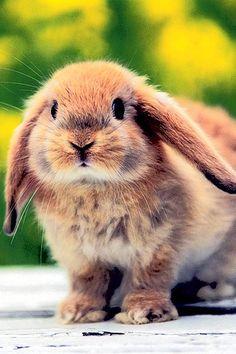 A bunnyyyyyy!