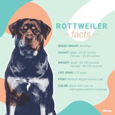 Rottweiler Names, Rottweiler Dog Breed, Puppy Food, Large Dog Breeds, Rottweilers, Therapy Dogs, Dry Dog Food, Rottweiler