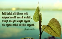 József Attila idézete a költészetről.