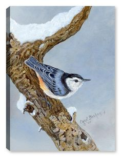 3756d913fdc White Breasted Nuthatch on Canvas. Canvas Art Plus