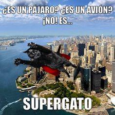 ¡Hoy es miáucoles! Todos los miáucoles publicamos un lolcat en español. ¡Esta semana les presentamos al Supergato!