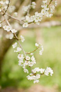 Spring time blooms, Dogwoods I believe.
