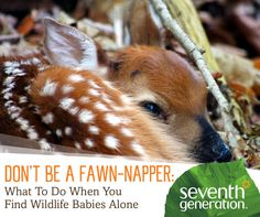 What do you do if you find a baby animal? A wildlife rehabilitator gives us tips!