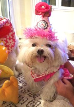 Happy birthday, Wilma!!!!