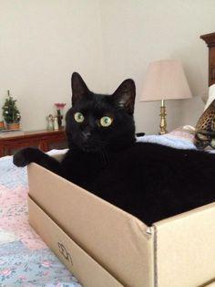 Beautiful cat ❤️