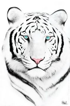 White tiger for Ryder. Born in the year of the white tiger. Believed to be lucky and bring money.