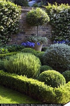 Topiary herb garden with Trachelospermum jasminoides growing on the wall in the background. Love the idea of topiary herbs White Gardens, Small Gardens, Formal Gardens, Outdoor Gardens, Modern Gardens, Japanese Gardens, Landscape Design, Garden Design, Green Landscape