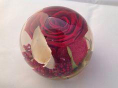 Beautiful single red rose