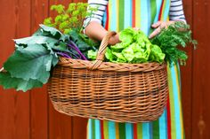 Vegetable Gardening in the Pacific Northwest: Great Tips for Beginners - ParentMap