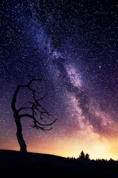 Starry night Milky Way, Northern Lights, Sunset, Places, Travel, Starry Nights, Black Swan, Beautiful, Photography
