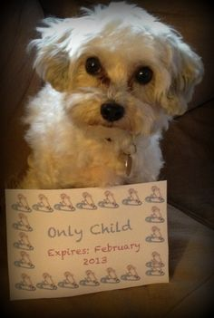 Pregnancy announcement. . . I know the dog thing is lame but I love it!