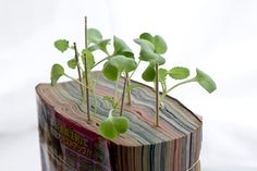 Phone Book- a great place to grow seedlings.