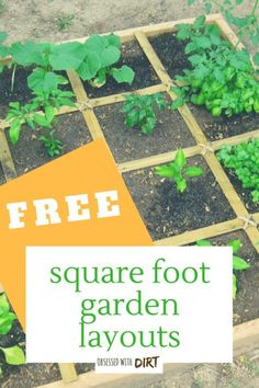 Learn everything you need to know about square foot gardening. Plus get free layouts to the best square foot gardening plans for high yields in small gardens. This is great for any gardener who is just starting a beginner vegetable garden and will help you plan, care for and harvest the most vegetables from your square foot garden.