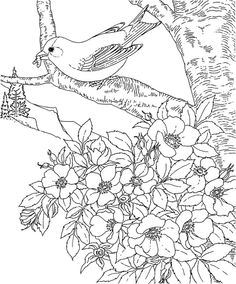 Birds and flowers - Coloring Pages  (736×886)