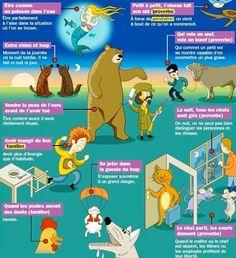 TICs en FLE: Fiche : 10 expressions avec des noms d'animaux