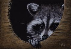 Skunks, Raccoons, Raccoon Art, Tattoo Arm, Painting & Drawing, Owl, Arms, Bird, Drawings