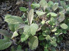 Šalvěj Korn, Detox, Plants, Plant, Planets