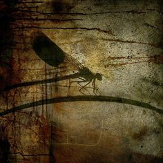 "Saatchi Online Artist eva christin laszka; Painting, ""Dragonfly"" #art"